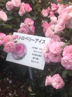 f:id:yamato1111:20160515193301j:plain