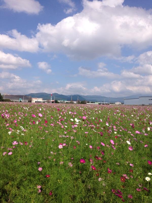 f:id:yamato1111:20161018160826j:plain