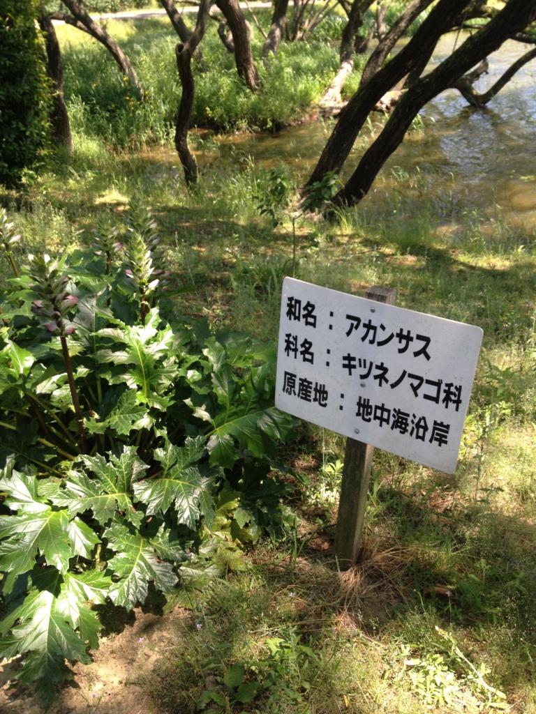 f:id:yamato1111:20170520064252j:plain