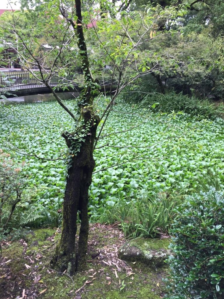 f:id:yamato1111:20171017163813j:plain