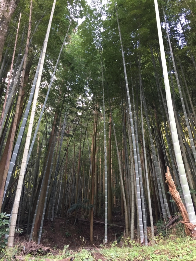 f:id:yamato1111:20171120142828j:plain