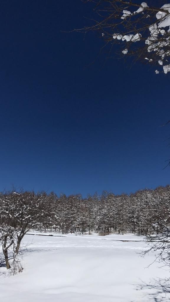 f:id:yamatori0422:20190310182728j:plain