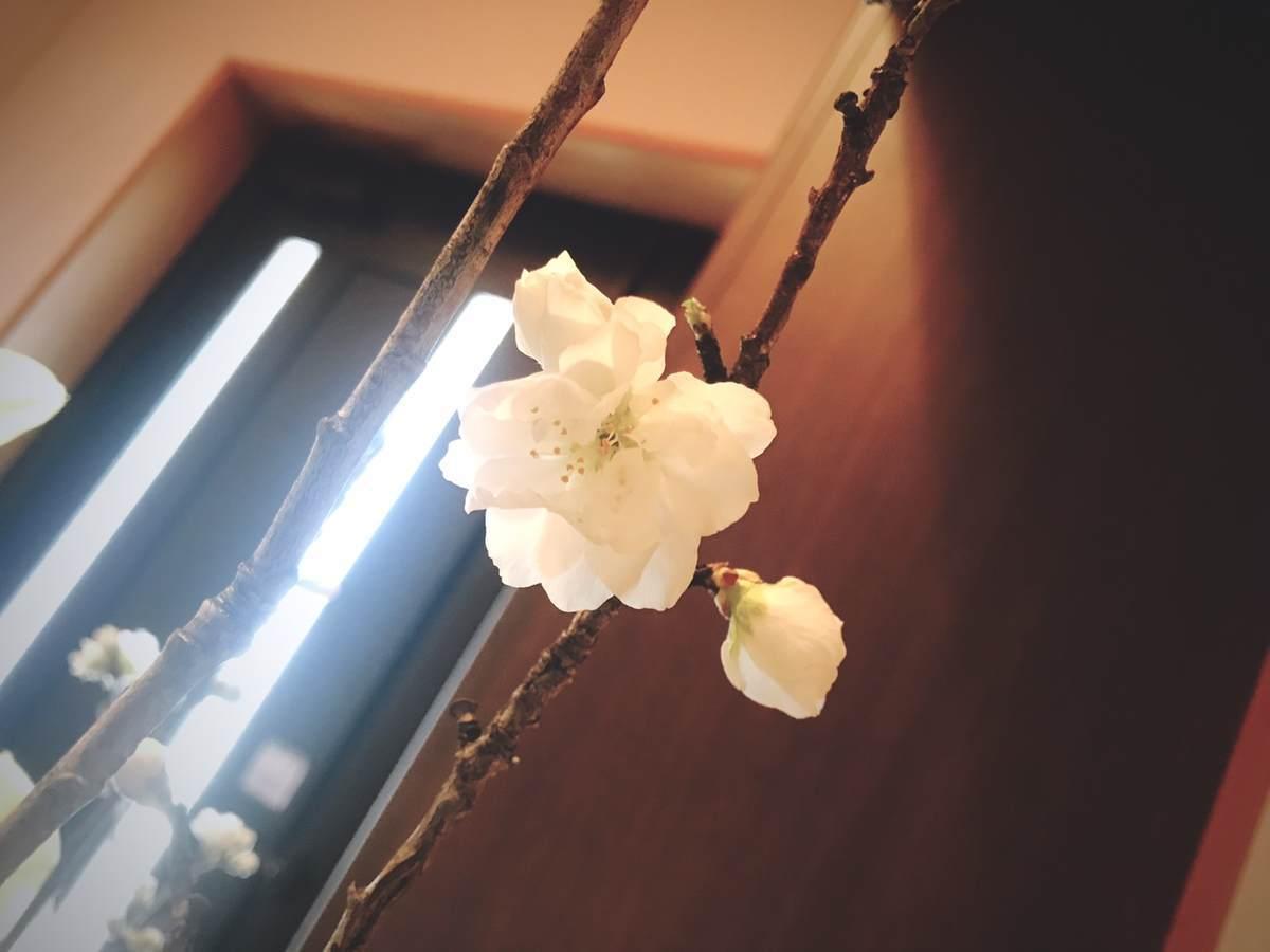 f:id:yamatori0422:20200405140329j:plain