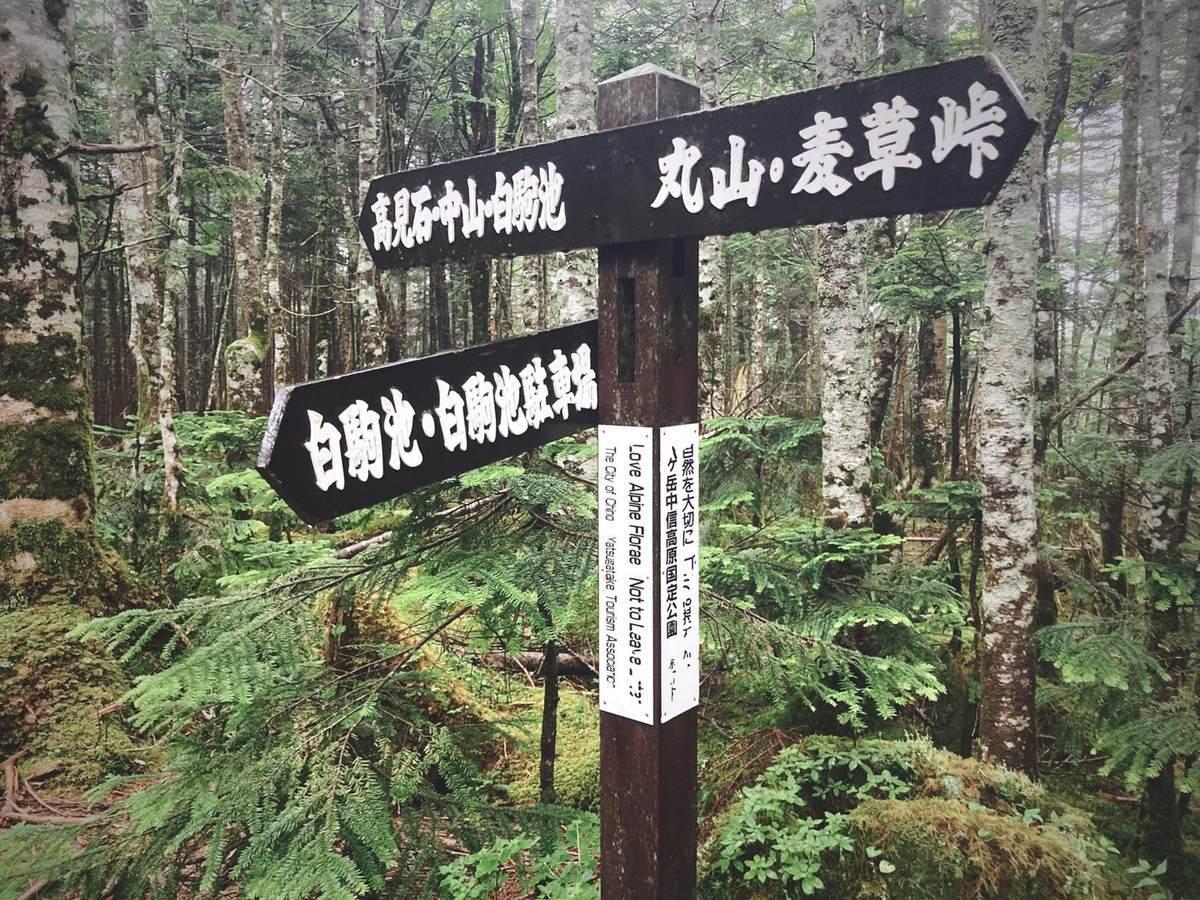 f:id:yamatori0422:20210809102034j:plain