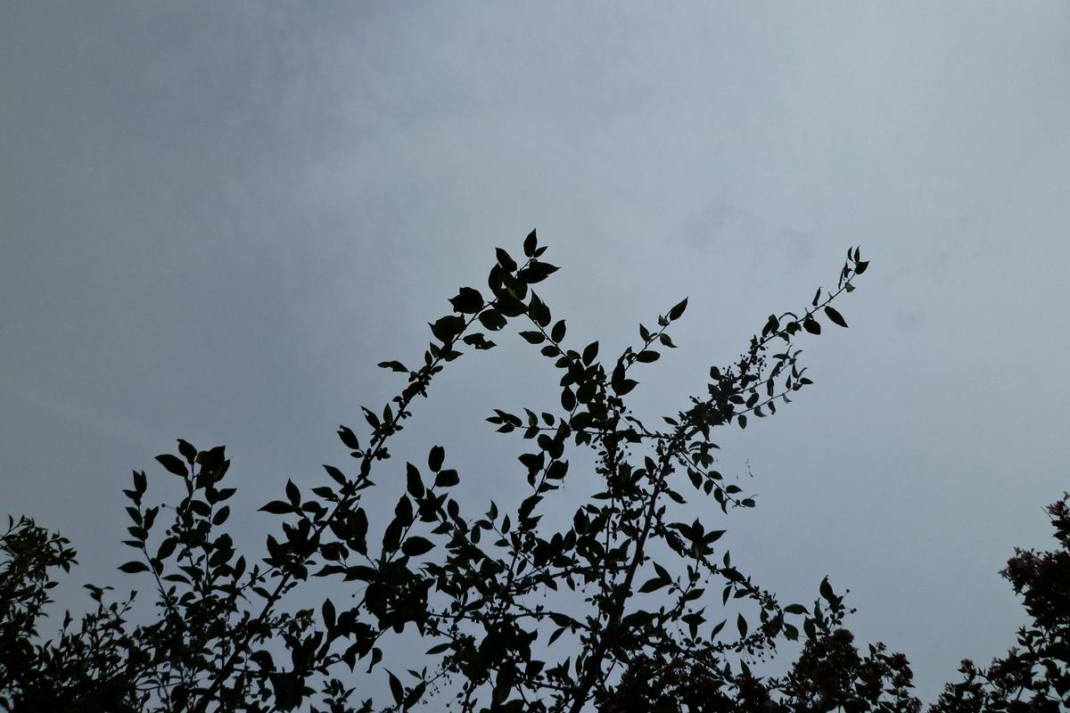 木の枝と曇り空