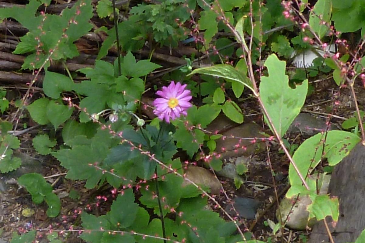ピンクの一輪の花