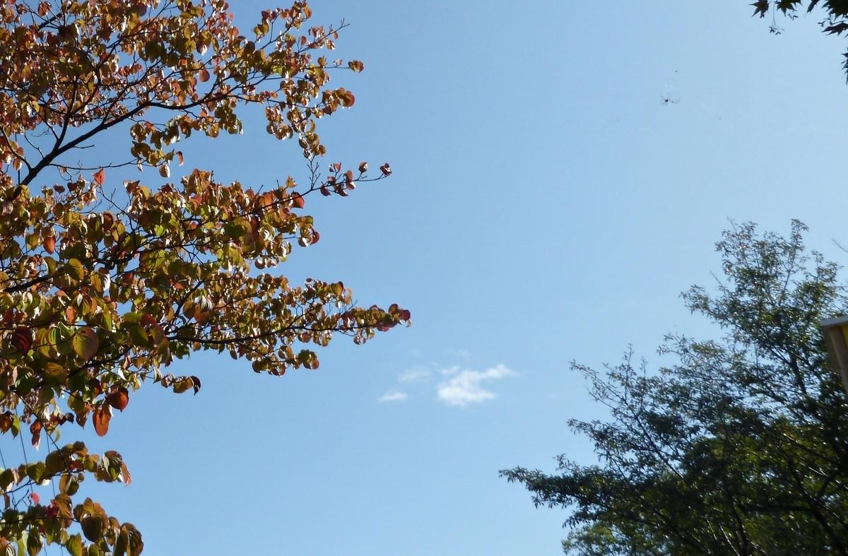 紅葉の木と青空