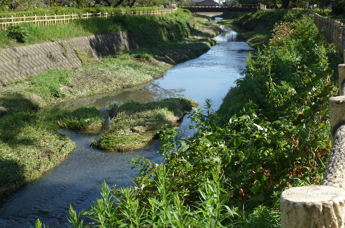 台風後に水の減った小川
