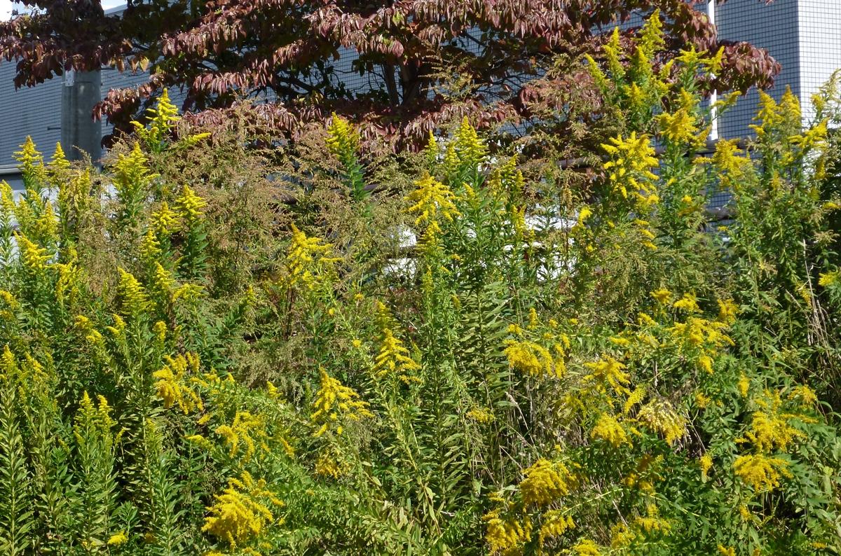 黄色い花と紅葉の木