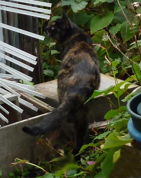猫の後ろ姿 台に上がる途中