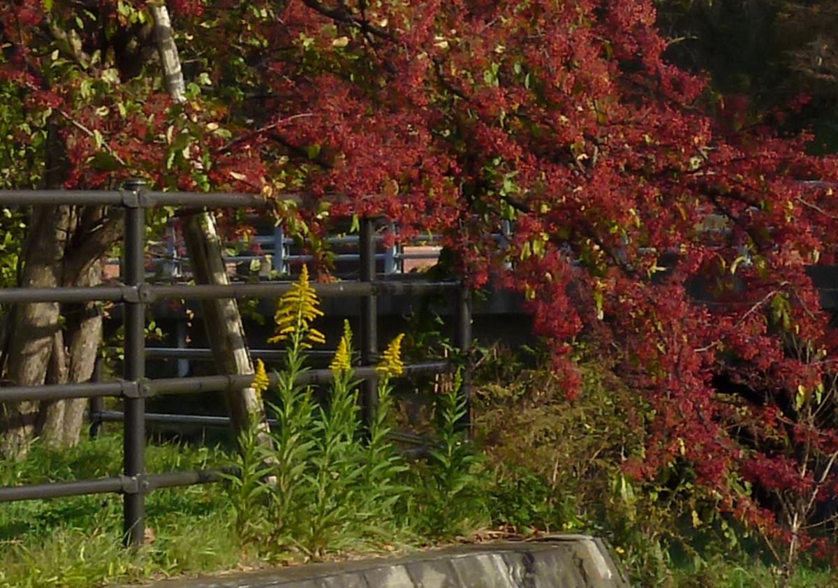 紅葉と黄色い花