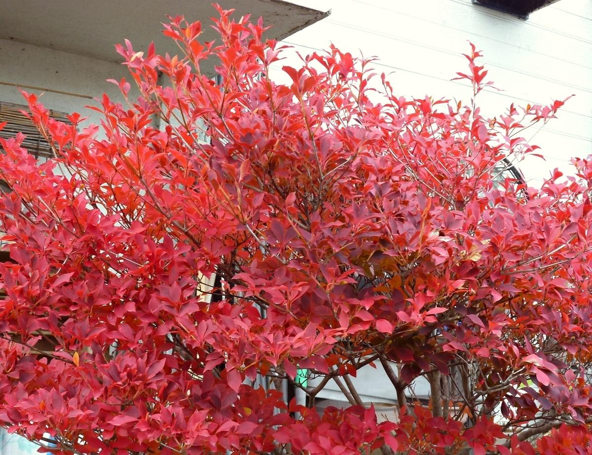 庭の紅葉した木