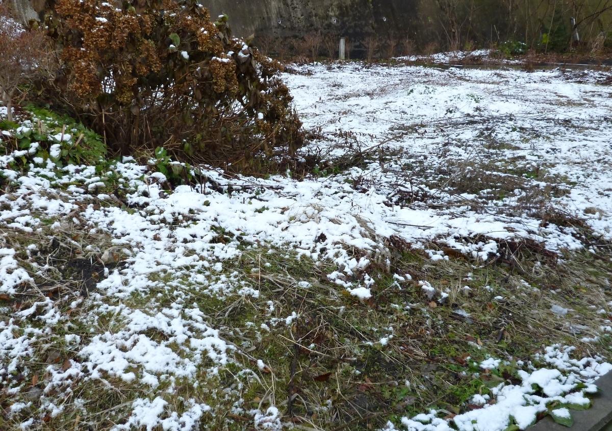 朝、融けずに残っていた雪