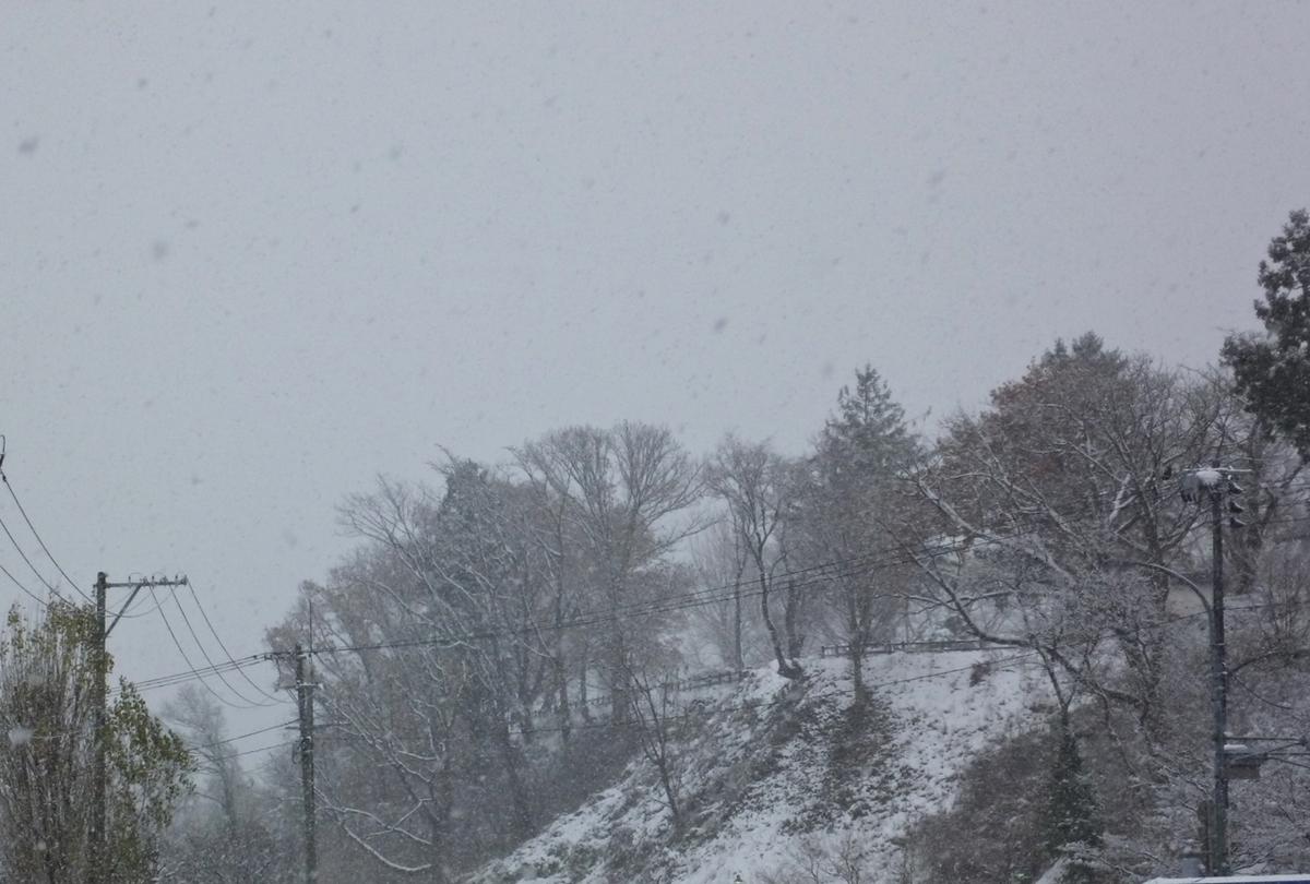 雪景色 林