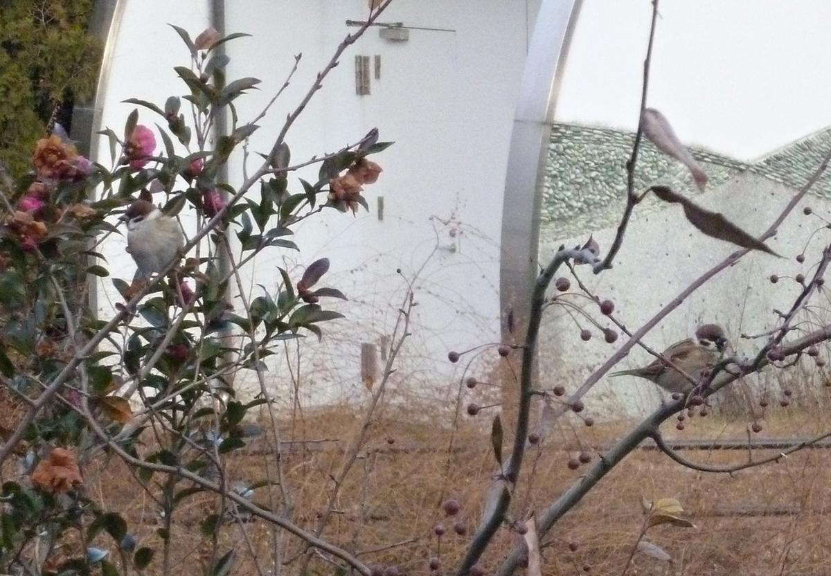 木にとまるスズメ2羽