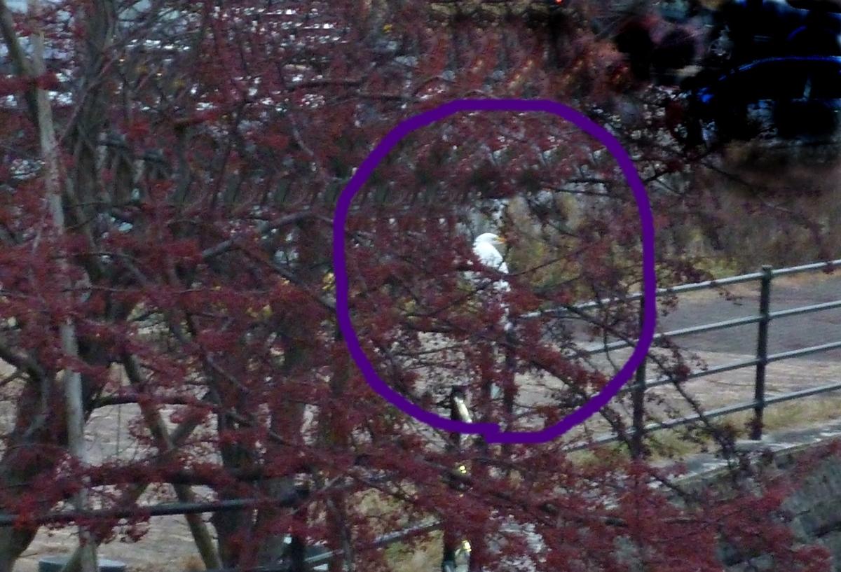 木に逃げたシラサギ