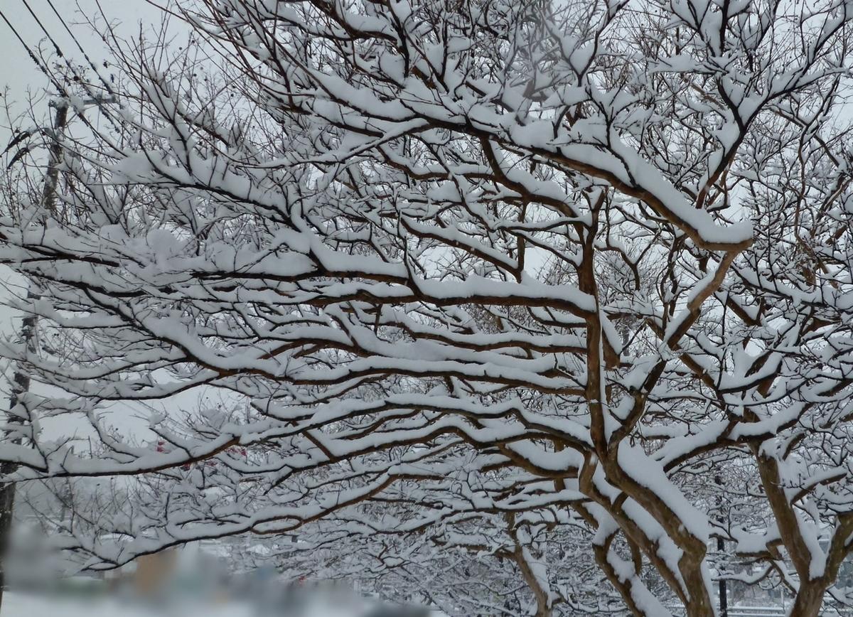 美しい枝と雪