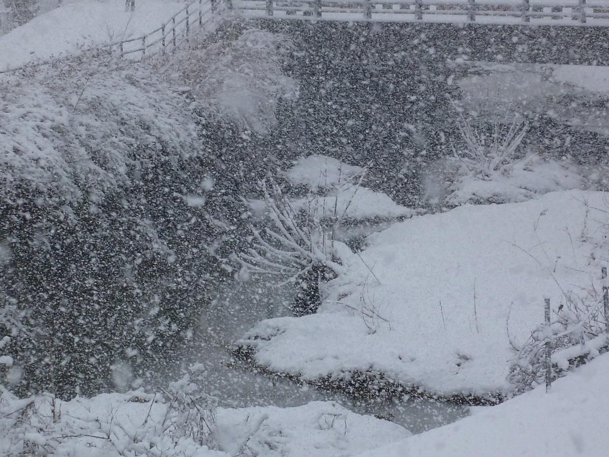 舞い降りる雪