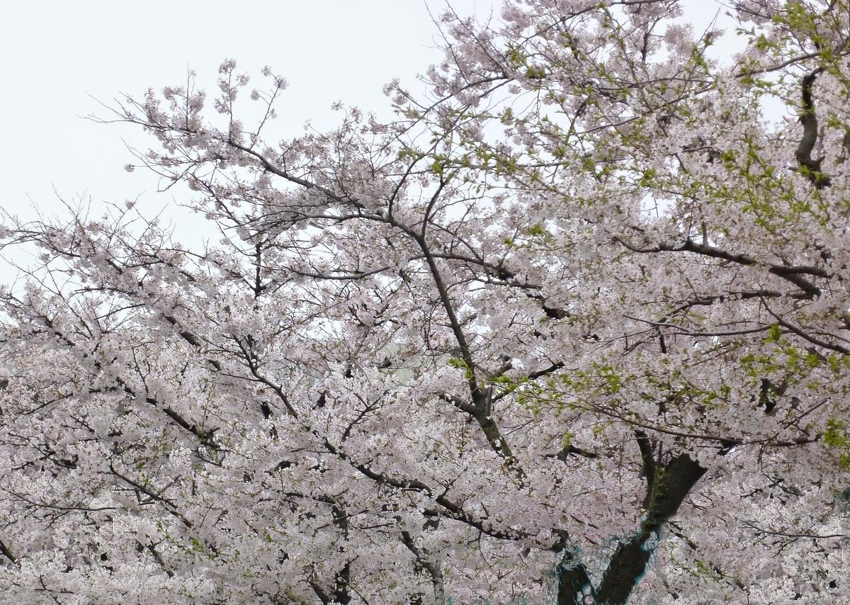 【ブログ内人気記事】5月の月間ランキング!と杖生活報告