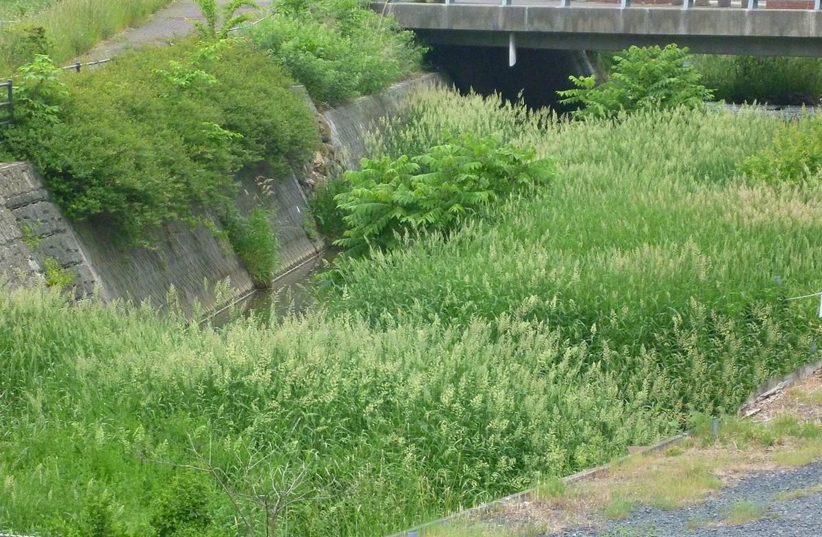 草だらけの川