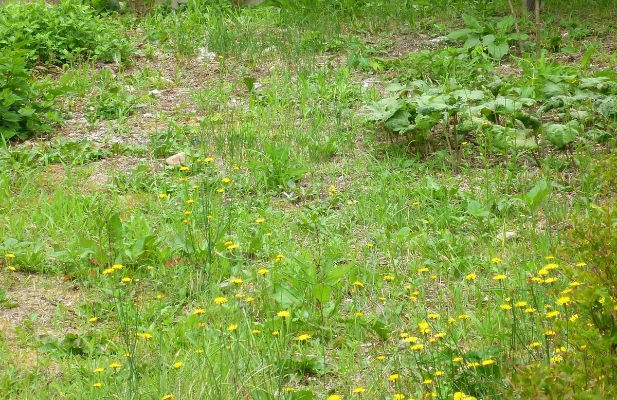 空き地 雑草