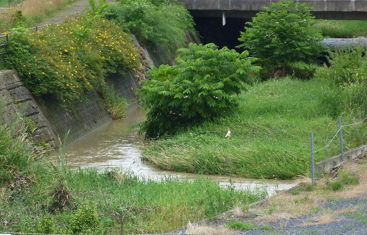 小川 増水