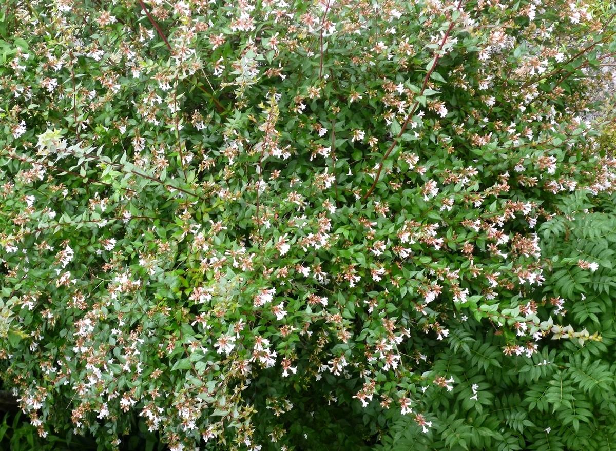 庭の木 花