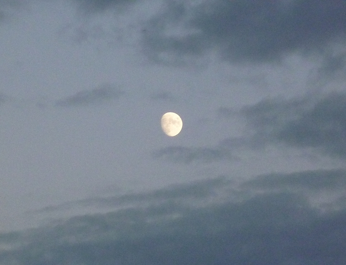 空に浮かぶ大福のような月