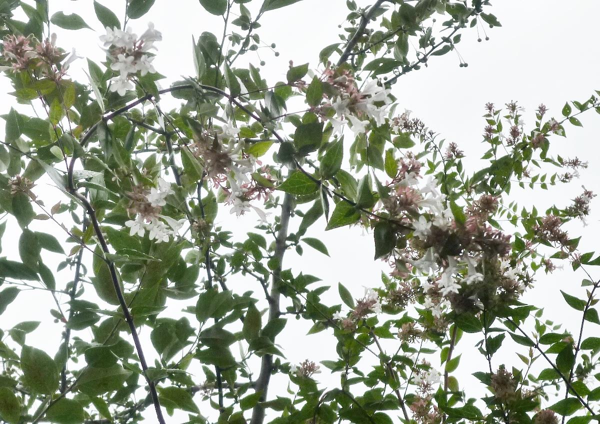 庭の木に咲いた白い花