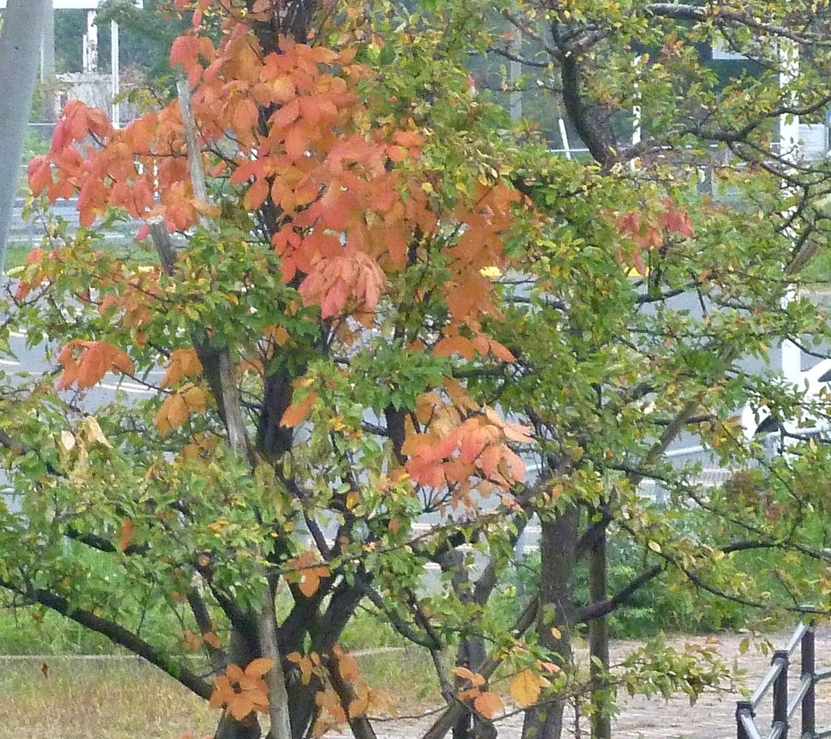 色づき始めた木の葉 2020年10月7日撮影
