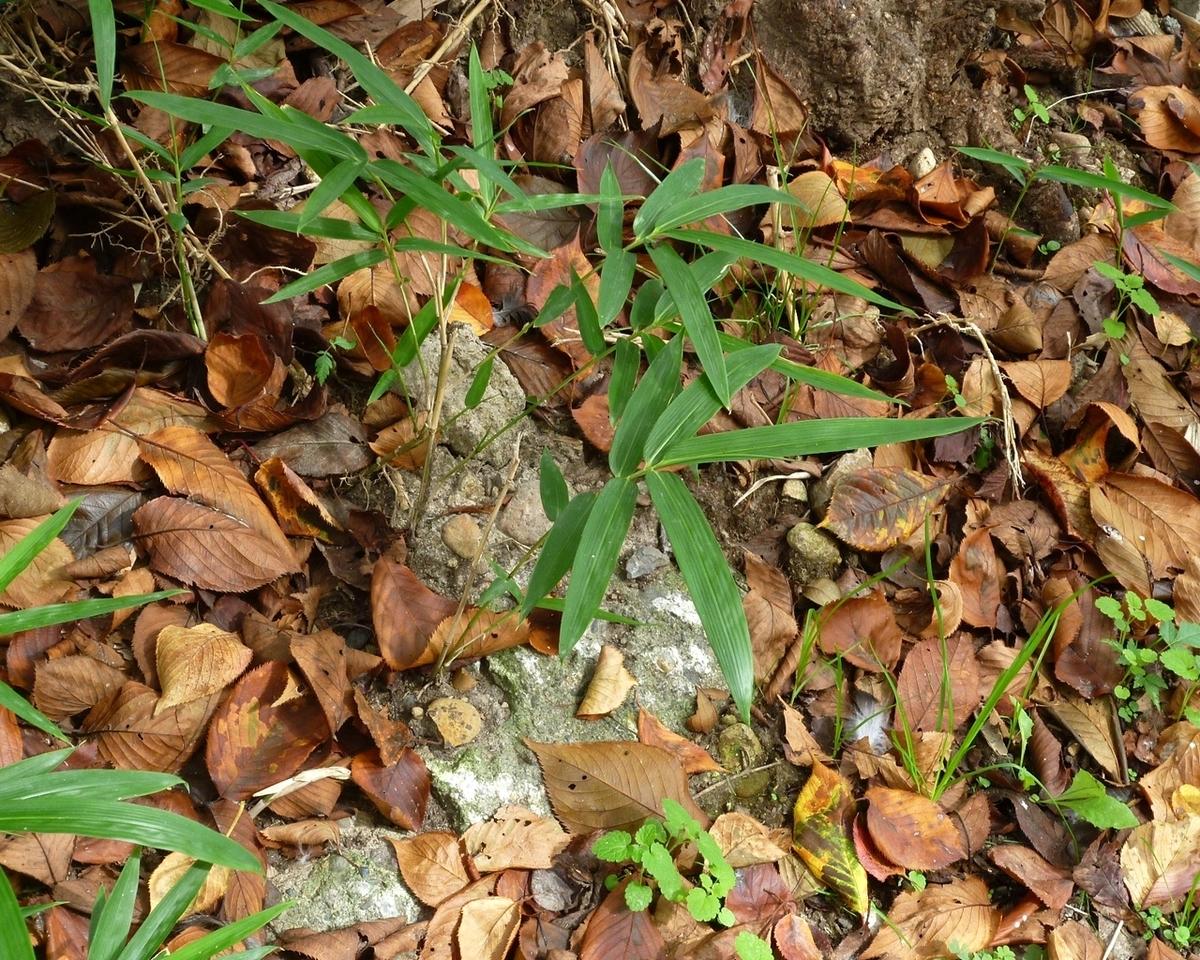 道路脇の枯れ葉
