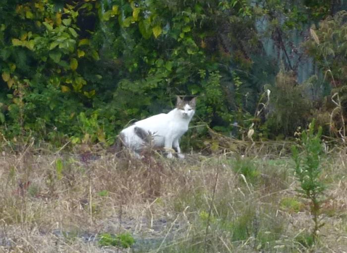 カメラ目線の白いブチ猫