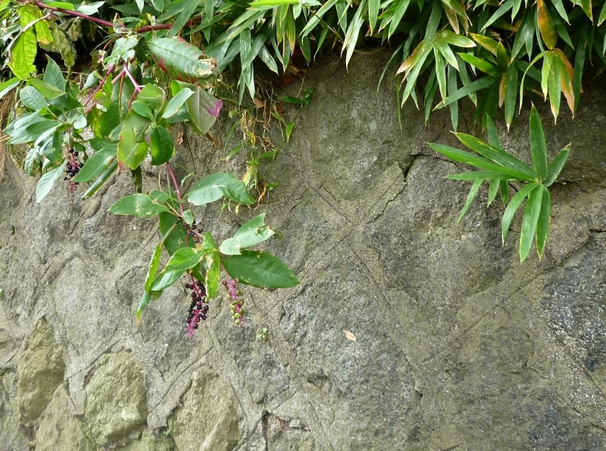 城の石垣跡