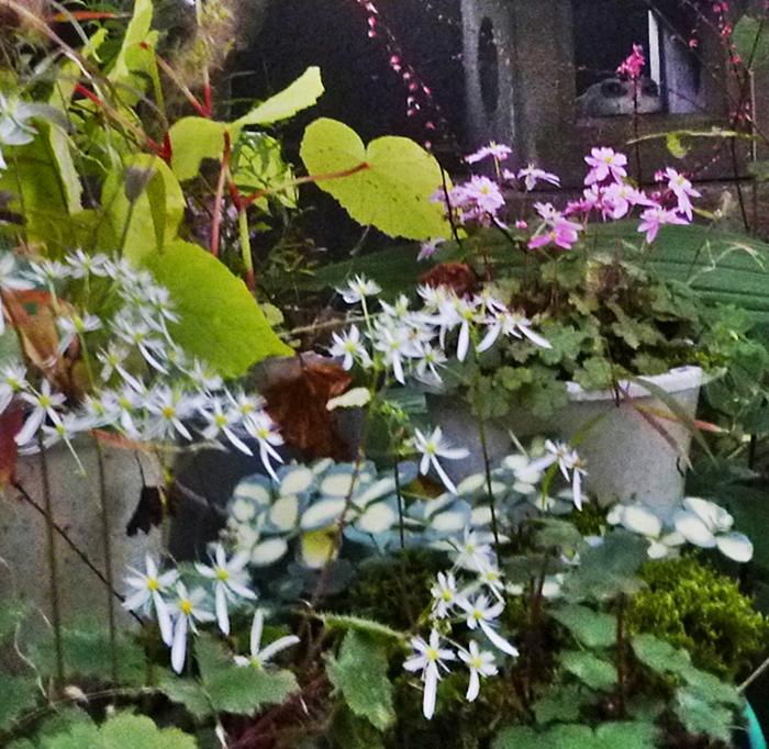 白い花とピンクの花とカエルの置物