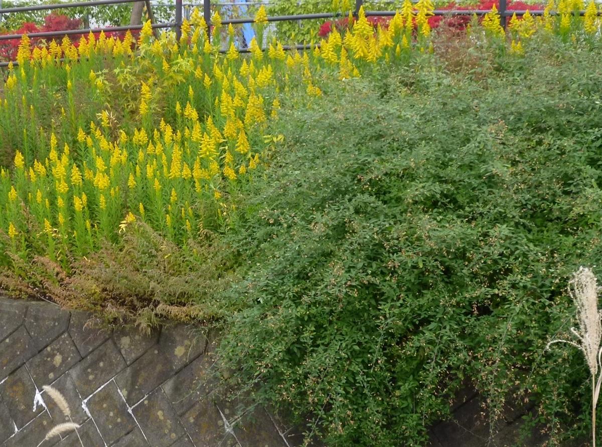 河原の植物たち