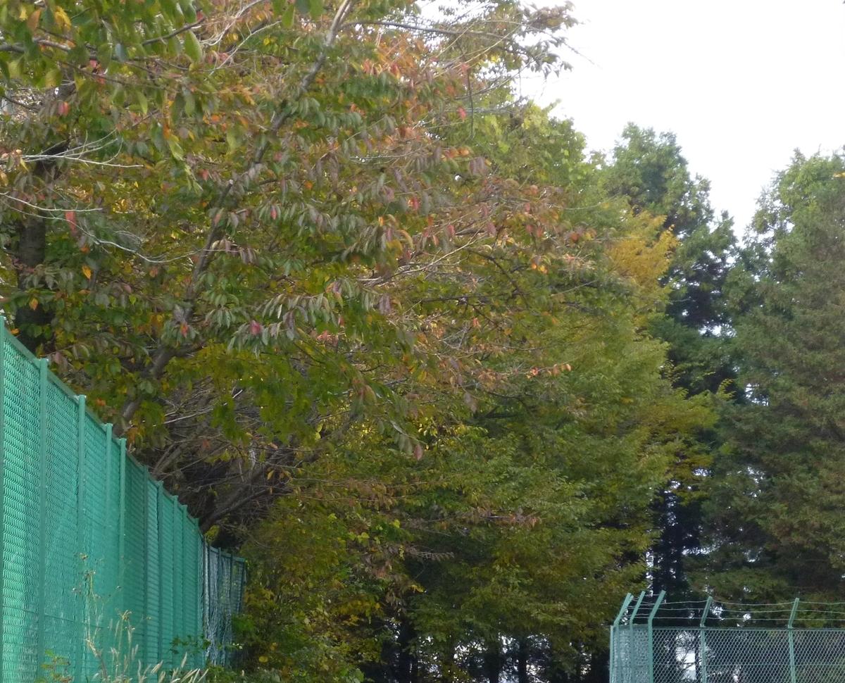 フェンスからはみ出し過ぎの木の枝