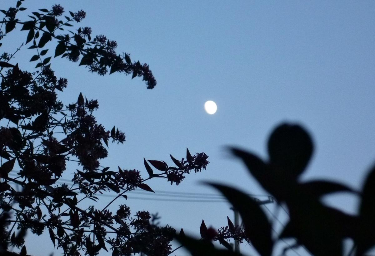 庭から見た月