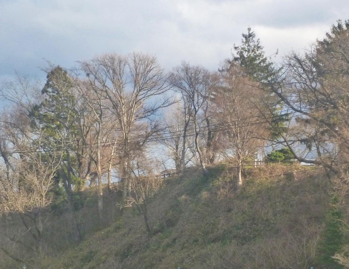 初冬の木立