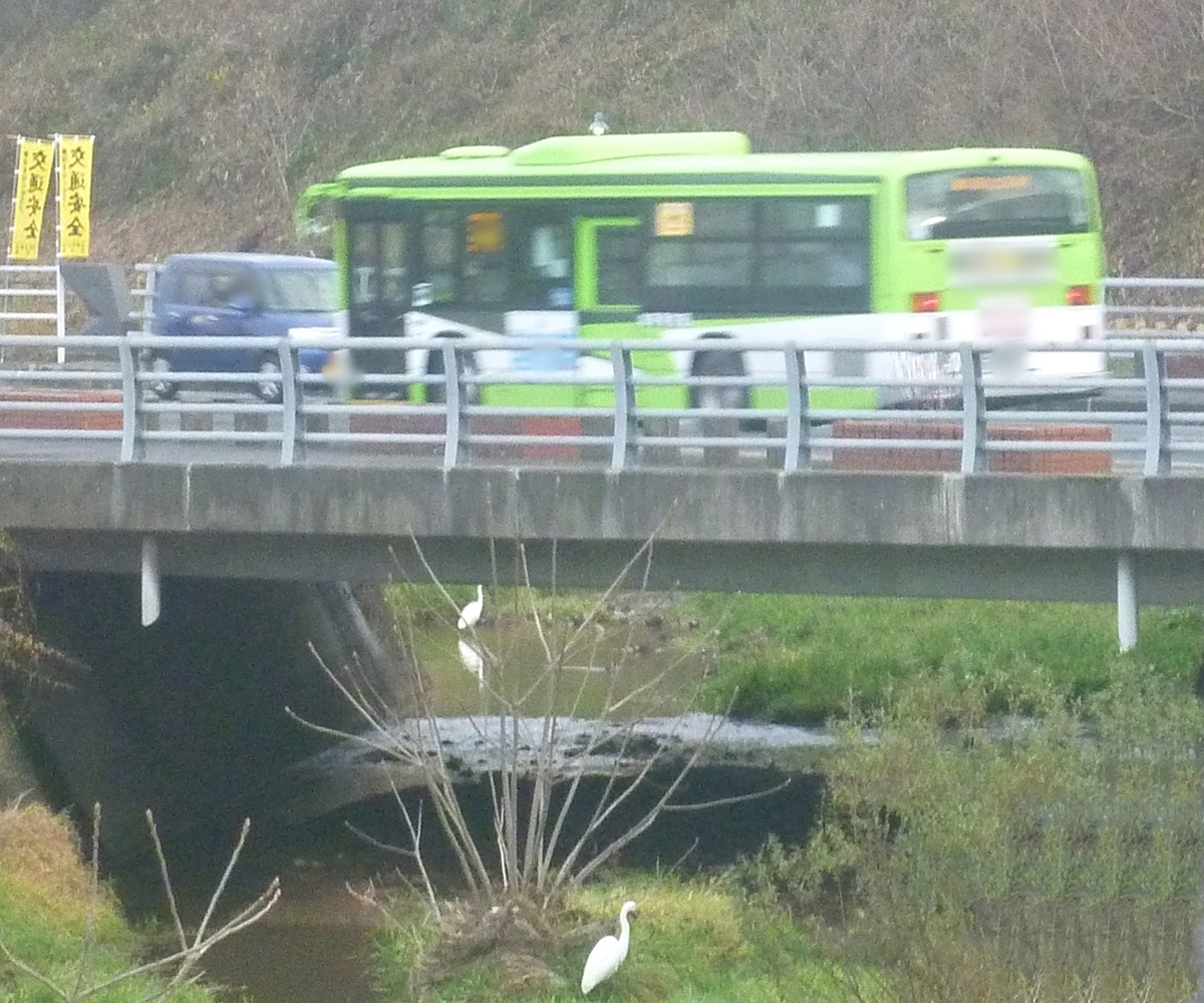 バスとシラサギ2羽