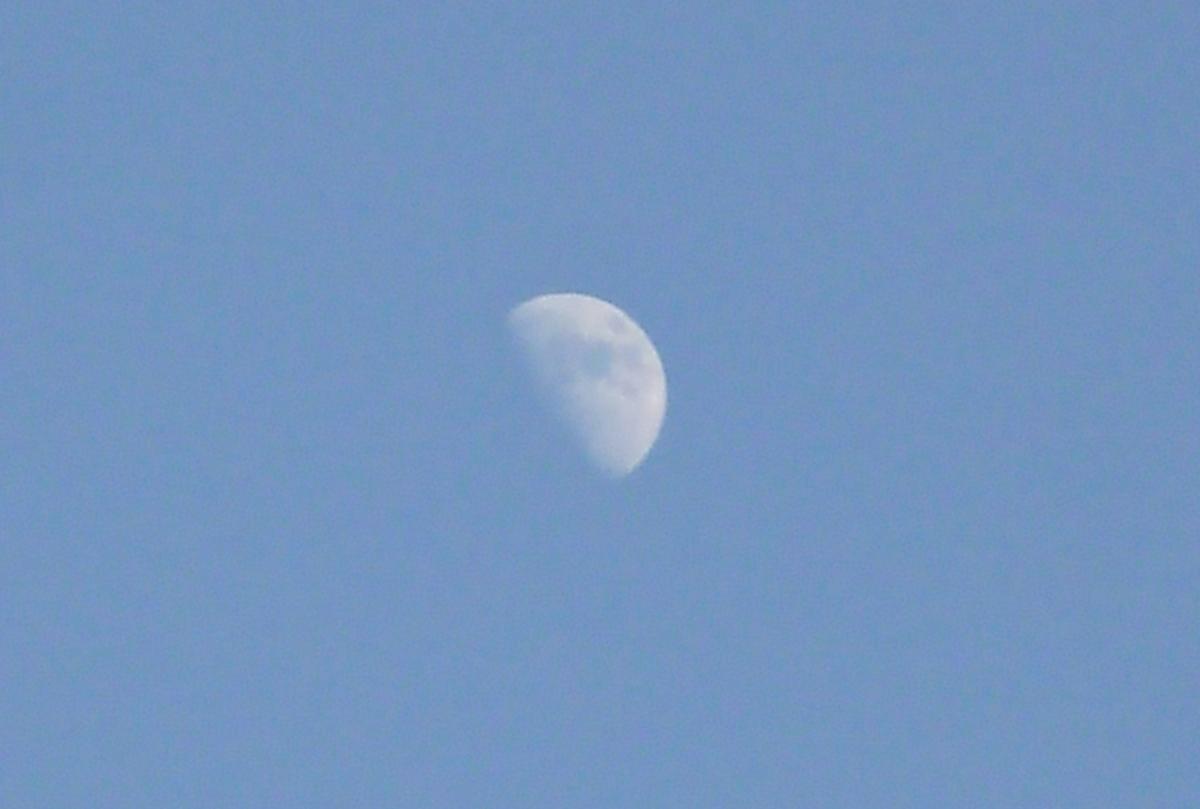 日中の空の半月