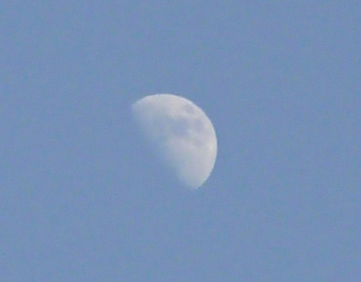 日中の空に浮かぶ半月