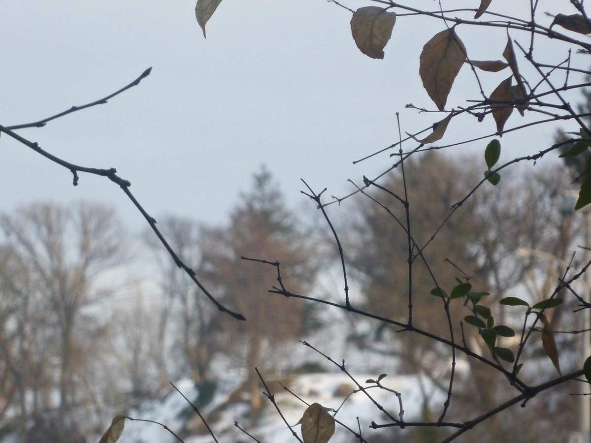 うちの木越しの遠景