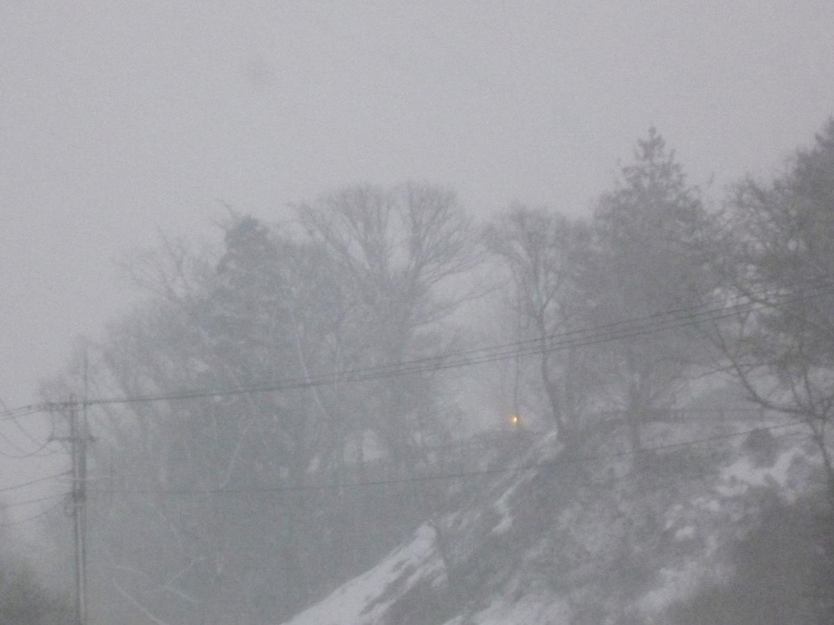 吹雪でかすむ林