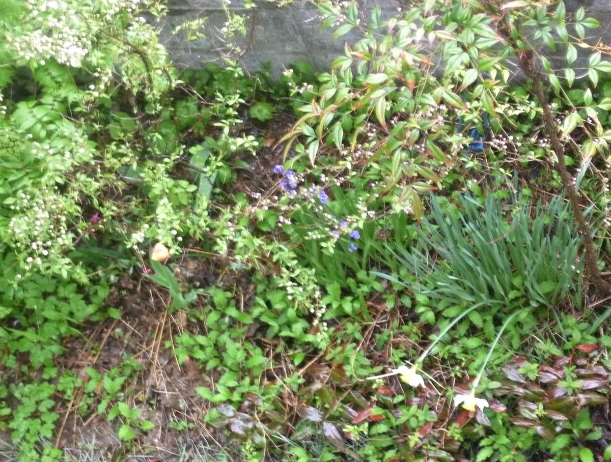 風雨の中の真下の庭