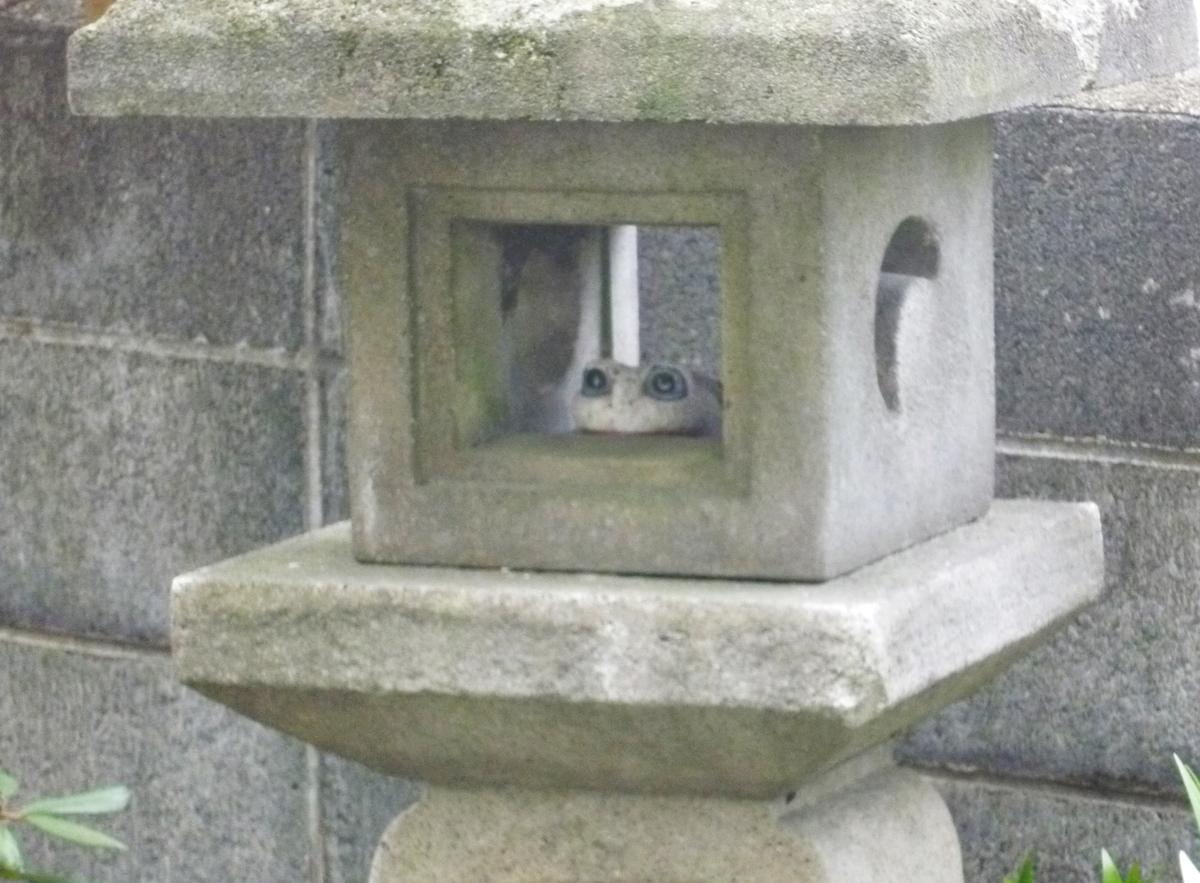 石灯籠と石のカエル