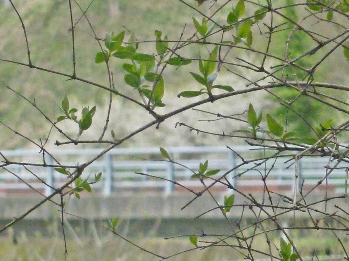 うちの枝越しの風景