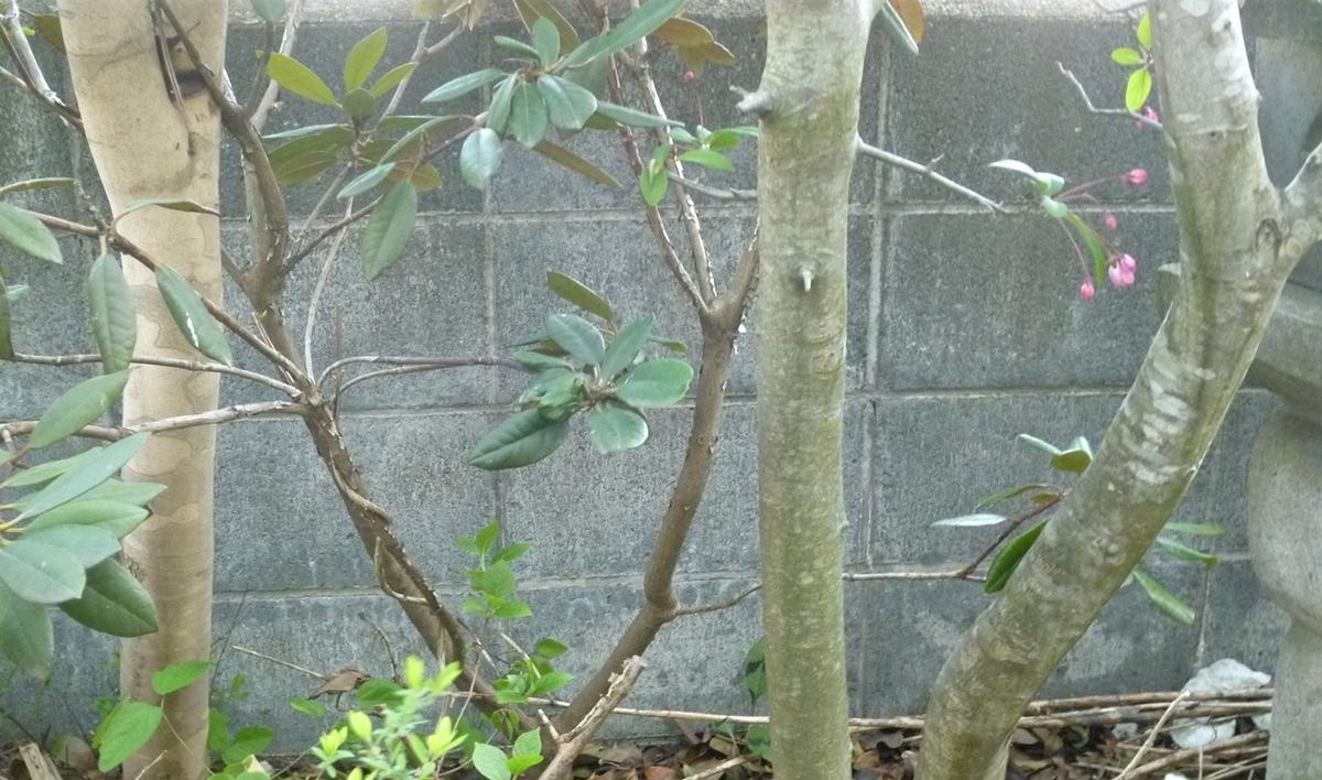 玄関側の大木の幹