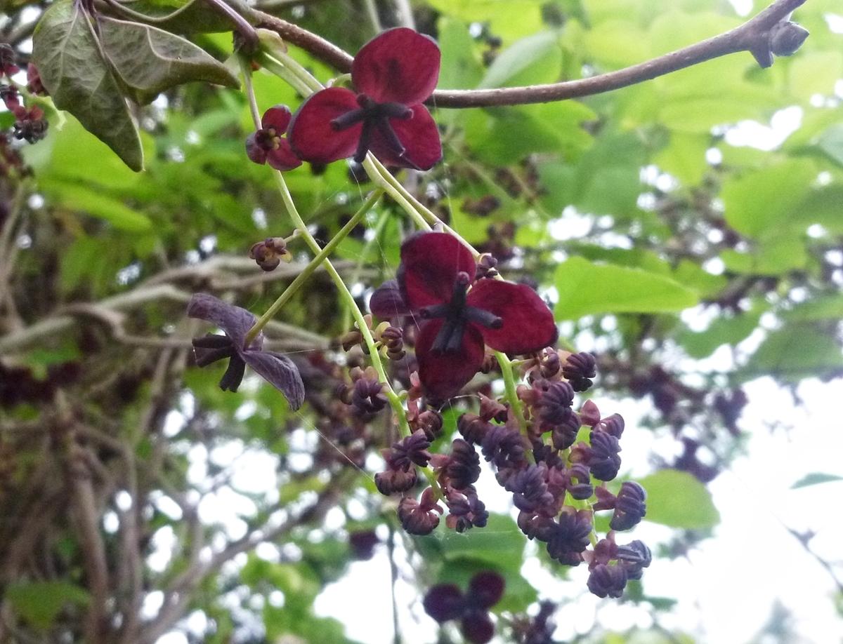 濃い紫の花?