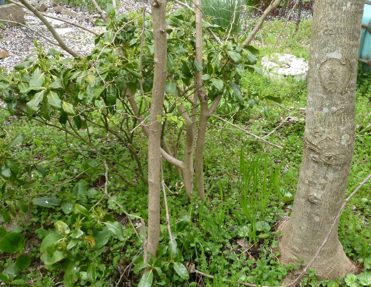 庭の端っこの木