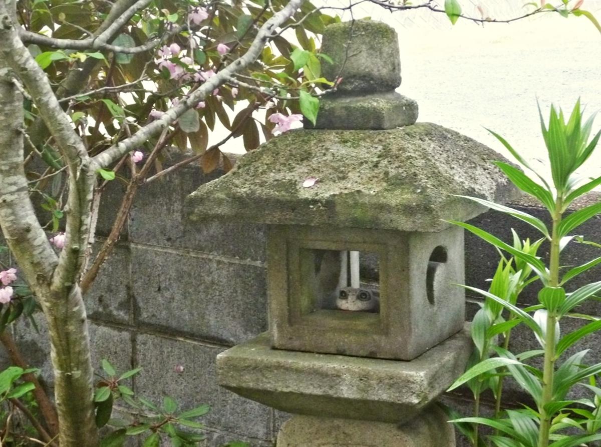 石灯篭とカエルの置物と八重桜
